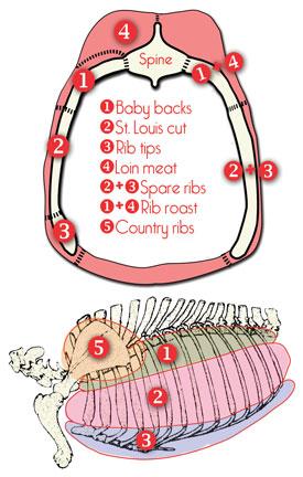 tværsnit af gris som viser hvor de forskellige ribs udskæringer sidder