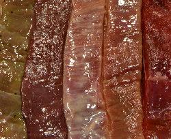 Spareribs På Gasgrill Hvor Længe : Spareribs tips for konkurrencegrillere #1 » grill & kokkerier
